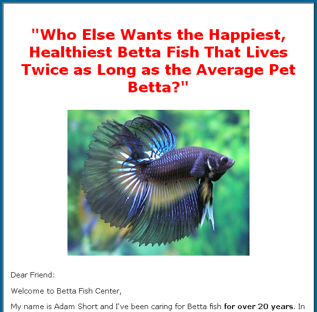 February 2009 local marketing ideas for Betta fish care guide